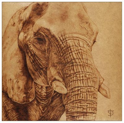 Elefante _by_felixdasilva