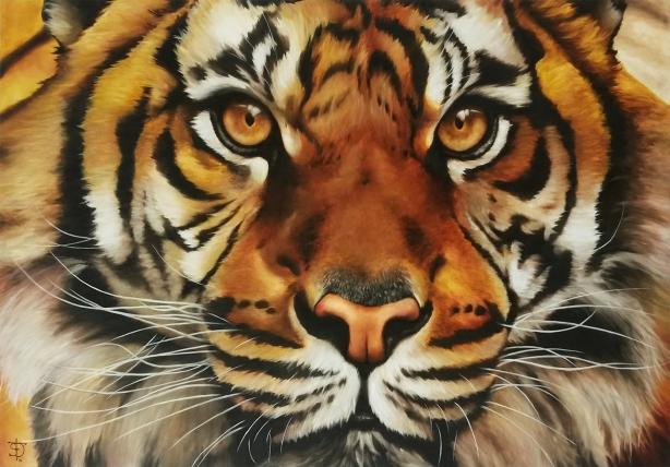Tigre 100x70cm